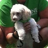 Adopt A Pet :: Duncan - Bridgewater, NJ