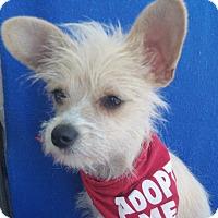 Adopt A Pet :: Ivory-WATCH MY VIDEO!!! - Irvine, CA