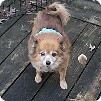 Adopt A Pet :: Bitsy - conroe, TX