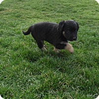 Adopt A Pet :: electra - mooresville, IN