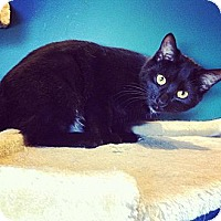 Adopt A Pet :: Autumn - Lexington, KY
