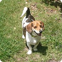 Adopt A Pet :: Teddy - Palm Bay, FL