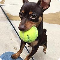 Adopt A Pet :: Marla - San Diego, CA