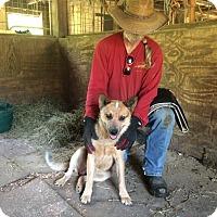 Adopt A Pet :: Rufus - Hohenwald, TN