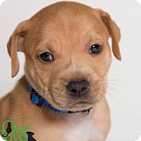 Adopt A Pet :: Lando - Savannah, GA