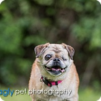 Adopt A Pet :: River - Grapevine, TX