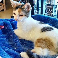 Adopt A Pet :: Alicia - Scottsdale, AZ