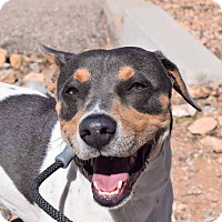 Adopt A Pet :: Tony - Sierra Vista, AZ