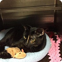 Adopt A Pet :: Carmella at Madison Heights - Warren, MI