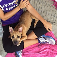 Adopt A Pet :: Anastasia - Acworth, GA