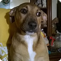 Adopt A Pet :: Emily Lucy - Harrisburg, PA