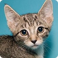 Adopt A Pet :: Latte - Jersey City, NJ