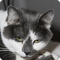 Adopt A Pet :: Suki - Sarasota, FL