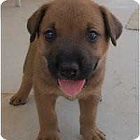 Adopt A Pet :: Senna (adoption pending) - Phoenix, AZ