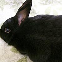 Other/Unknown Mix for adoption in Harrisburg, Pennsylvania - Rosie