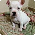 Adopt A Pet :: Poe