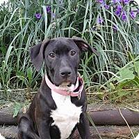 Adopt A Pet :: Sansa - Davison, MI