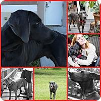 Adopt A Pet :: SAYLER - Davenport, FL