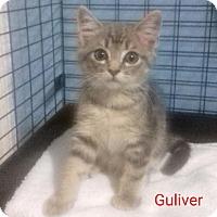 Adopt A Pet :: Gulliver - McDonough, GA