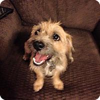 Adopt A Pet :: Christine Baranski - Jersey City, NJ