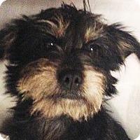 Adopt A Pet :: Scooter - Staunton, VA