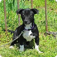 Adopt A Pet :: JERRICO - Bedminster, NJ