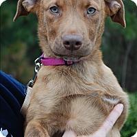 Adopt A Pet :: Cayenne - Richmond, VA