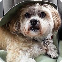 Adopt A Pet :: Oscar~ URGENT FOSTER NEEDED! - Caldwell, NJ