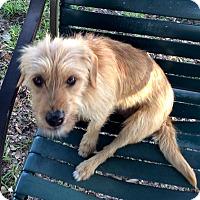 Adopt A Pet :: Toto - Tavares, FL