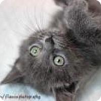 Adopt A Pet :: Marlo - Medford, NJ