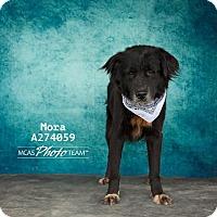 Adopt A Pet :: MORA - Conroe, TX
