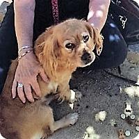 Adopt A Pet :: Katana - Sacramento, CA