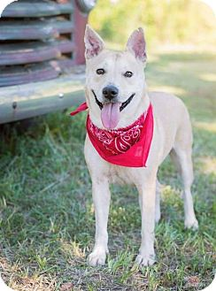 Carolina Dog/Shepherd (Unknown Type) Mix Dog for adoption in Baltimore, Maryland - Katiyana