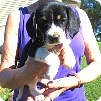 Adopt A Pet :: SLICK - Lincolndale, NY