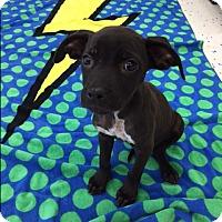 Adopt A Pet :: Boo - Saint Augustine, FL