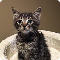 Adopt A Pet :: Cambino - Wayne, NJ