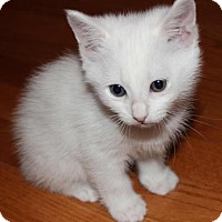 Adopt A Pet :: Olympia - Austin, TX