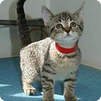 Adopt A Pet :: Presto - Englewood, FL