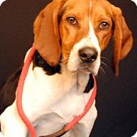 Adopt A Pet :: Chance - Newland, NC