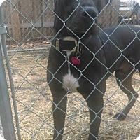Adopt A Pet :: Dawson-Adoption Pending - Des Moines, IA