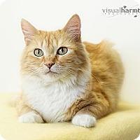 Adopt A Pet :: Caitlyn - Phoenix, AZ