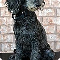 Adopt A Pet :: Perry - Bridgeton, MO