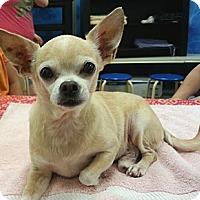 Adopt A Pet :: Vincent - Orlando, FL