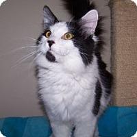 Adopt A Pet :: K-Kostendt4-Bates - Colorado Springs, CO
