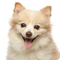 Adopt A Pet :: Laverne - Burbank, CA