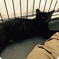 Adopt A Pet :: Sid - Speonk, NY