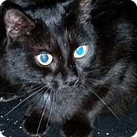 Adopt A Pet :: Little Gurl - Putnam, CT
