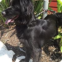 Adopt A Pet :: Lanie - Sugarland, TX
