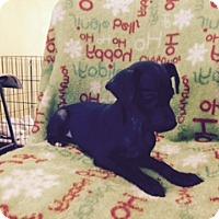 Adopt A Pet :: SEPPI - Elk Grove, CA