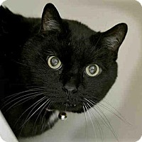 Adopt A Pet :: OLIVER - Pittsburgh, PA